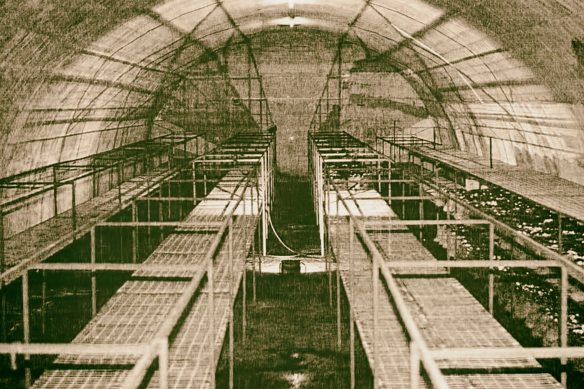 Exploration of Adelaide's Underground Bunkers, Air-Raid