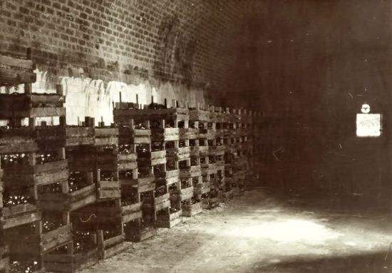Harvested mushrooms within tunnels originally placed in wooden boxes. (Source: Supplied)